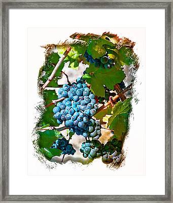 Estate Grown II Framed Print by Ken Evans