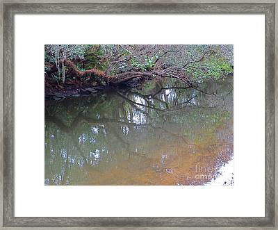 Estero River At  The Historic Koreshan Unity Settlement. Estero Florida. 1893. Framed Print