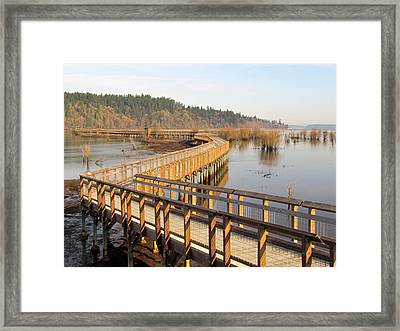 Framed Print featuring the photograph Estuary Boardwalk Trail by I'ina Van Lawick