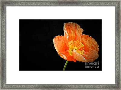 Eternal 2 Framed Print by Chalet Roome-Rigdon