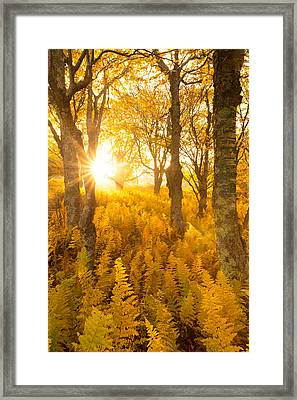 Framed Print featuring the photograph Eternal Sunshine by Bernard Chen