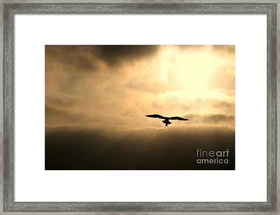 Framed Print featuring the photograph Eternal White Light by Polly Peacock
