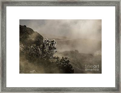 Ethereal Beauty Framed Print by Sue Smith