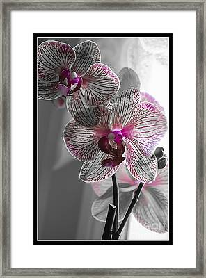 Ethereal Orchid Framed Print