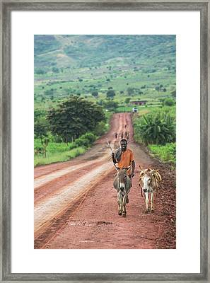 Ethiopian Farmer Walking Donkeys Framed Print