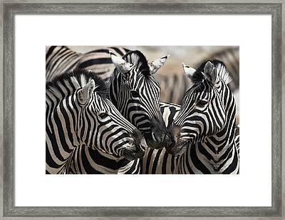 Etosha National Park Framed Print