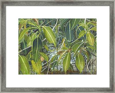 Euca - Leaves Section Framed Print