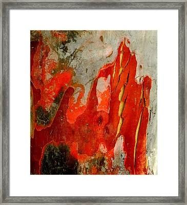 Eucalyptus Bark Framed Print by Peter Mooyman