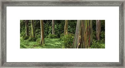 Eucalyptus Dream Framed Print