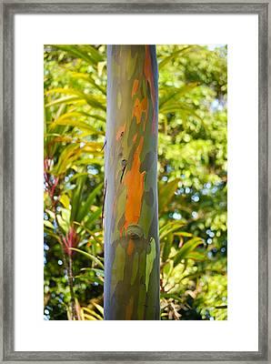 Eucalyptus In Camo Framed Print
