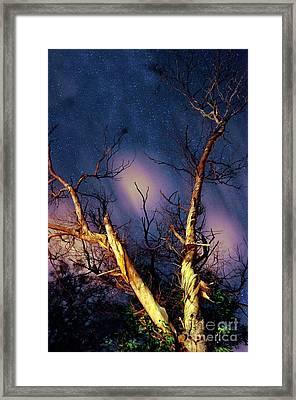 Eucalyptus Night Tree Framed Print by Petros Yiannakas