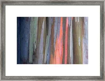Eucalyptus Tree Bark Framed Print by Karon Melillo DeVega