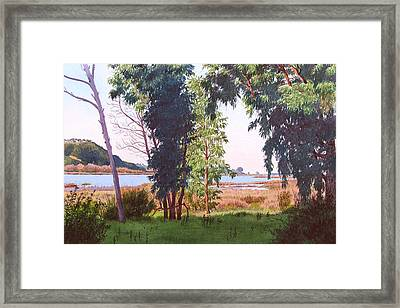 Eucalyptus Trees At Batiquitos Lagoon Framed Print by Mary Helmreich