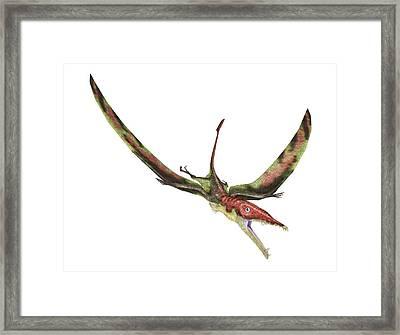 Eudimorphodon Framed Print