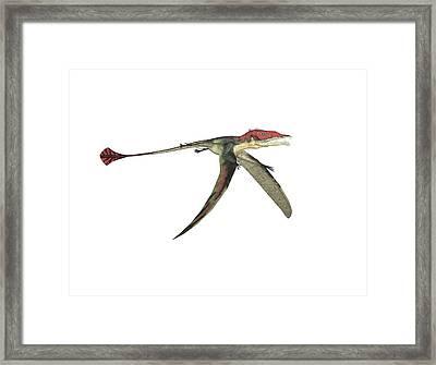 Eudimorphodon Pterosaur Framed Print