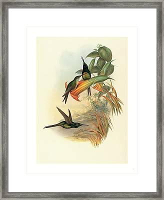 Eugenia Imperatrix Empress Hummingbird Framed Print