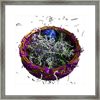 Eukaryotic Cell Nucleus, Artwork Framed Print by Science Photo Library