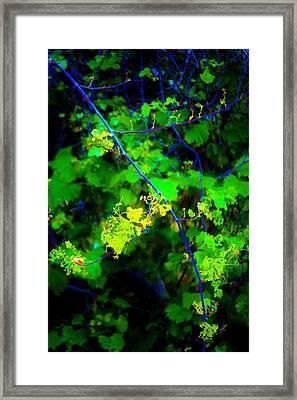 Euphoric Vine Framed Print