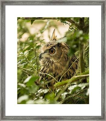 Eurasian Eagle-owl 2 Framed Print