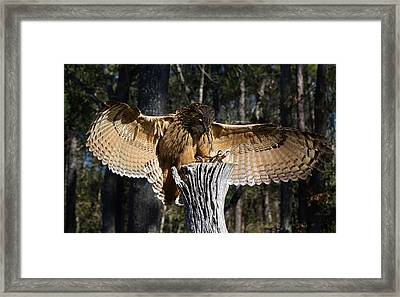Eurasian Eagle Owl Coveting His Prey Framed Print by Paulette Thomas