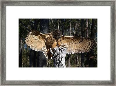 Eurasian Eagle Owl Coveting His Prey Framed Print by Paulette Thomas