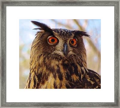 Eurasian Eagle Owl Framed Print by Cynthia Guinn