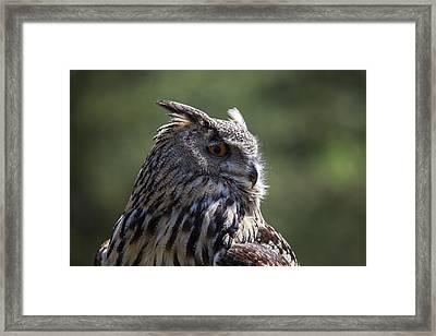 Eurasian Eagle-owl Framed Print by Garry Gay