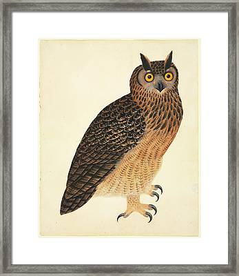 Eurasian Eagle-owl Framed Print by Natural History Museum, London