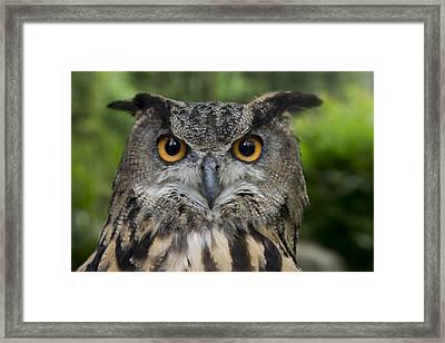 Eurasian Eagle-owl Framed Print by San Diego Zoo