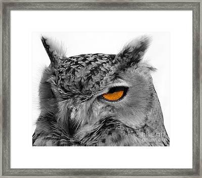 Eurasian Eagle Owl Framed Print by Skip Willits