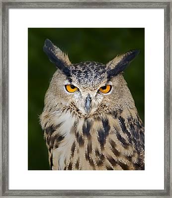 Eurasian Eagle Owl Framed Print by Susan Candelario