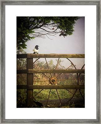 Eurasian Magpie In Morning Mist Framed Print