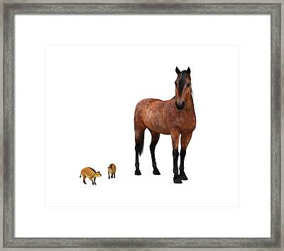 Eurohippus And Modern Horse Framed Print by Walter Myers