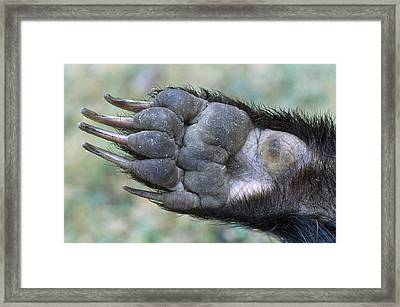 European Badge Paw Framed Print by John Daniels