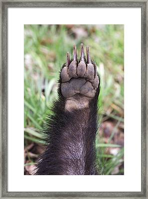 European Badger Paw Framed Print by Duncan Usher