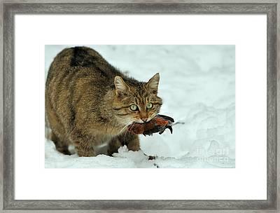 European Wildcat Framed Print by Reiner Bernhardt