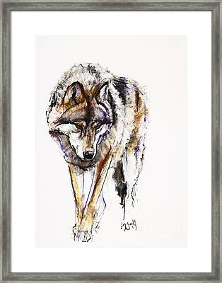 European Wolf Framed Print
