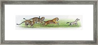 Eusmilus Hunting Palaeotherium Framed Print by Deagostini/uig