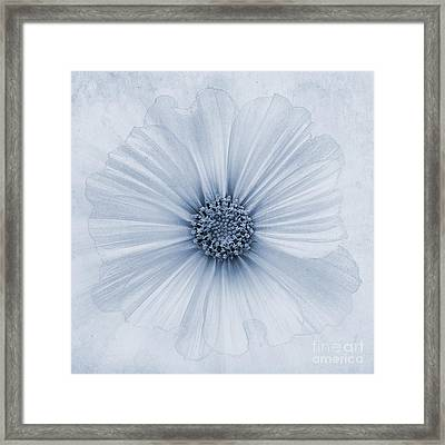 Evanescent Cyanotype Framed Print by John Edwards