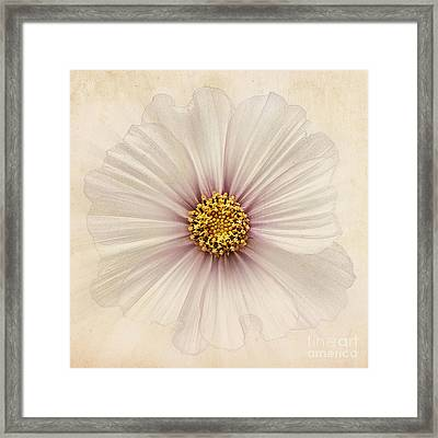 Evanescent Framed Print by John Edwards