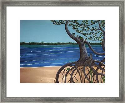 Evans Landing Mangroves Framed Print