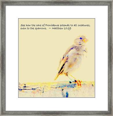 Even Sparrows Matter Framed Print by Kathy Barney