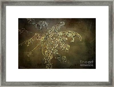 Even Weeds Are Beautiful Framed Print by Terry Rowe