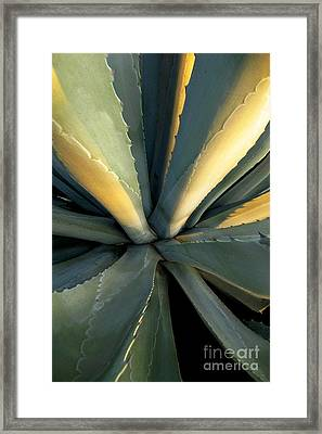 Evening Agave Framed Print by Ellen Cotton