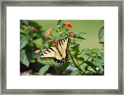Evening Beauty Framed Print by Debbie Green