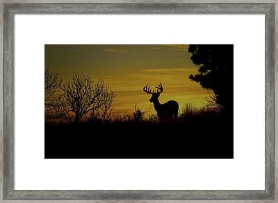 Evening Buck Framed Print