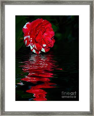 Evening Camellia Reflections By Kaye Menner Framed Print