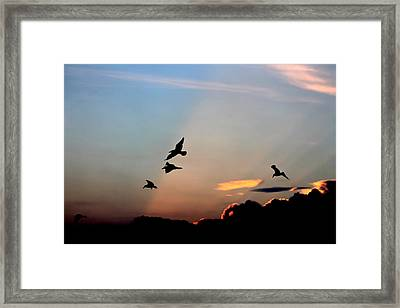 Framed Print featuring the photograph Evening Dance In The Sky by Bruce Patrick Smith