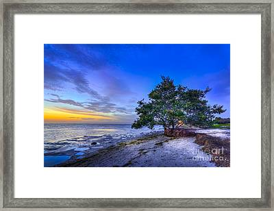 Evening Delight Framed Print