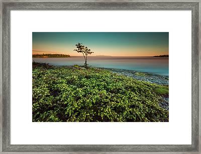 Evening Falls On A Juniperberry Bush Framed Print